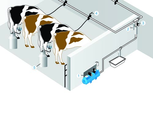 Fixed-Milking-Machine-Illustration