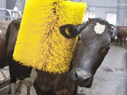 Cow Grooming Brush a feeling of comfort for your Cattle